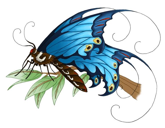 papillon_pauline_coul